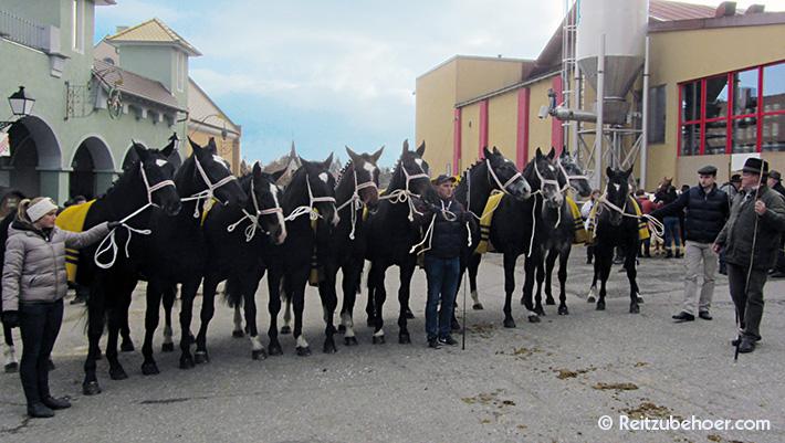 Großer Pferdemarkt in Bad Schussenried