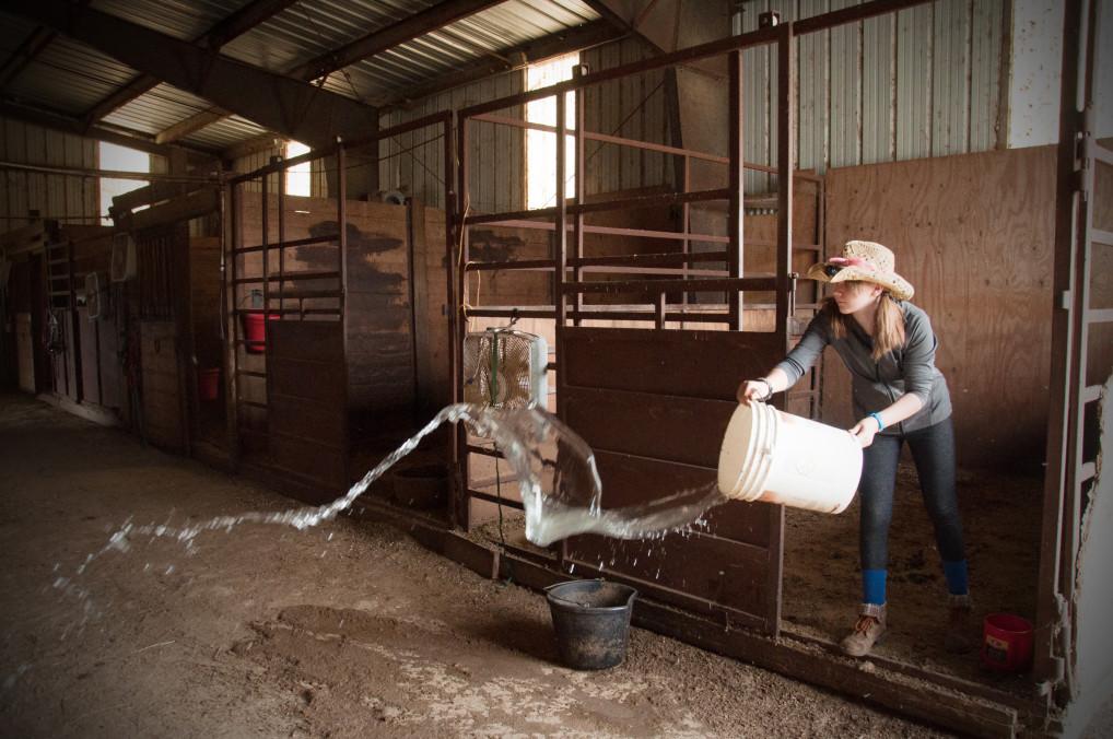 Frau arbeitet im Stall