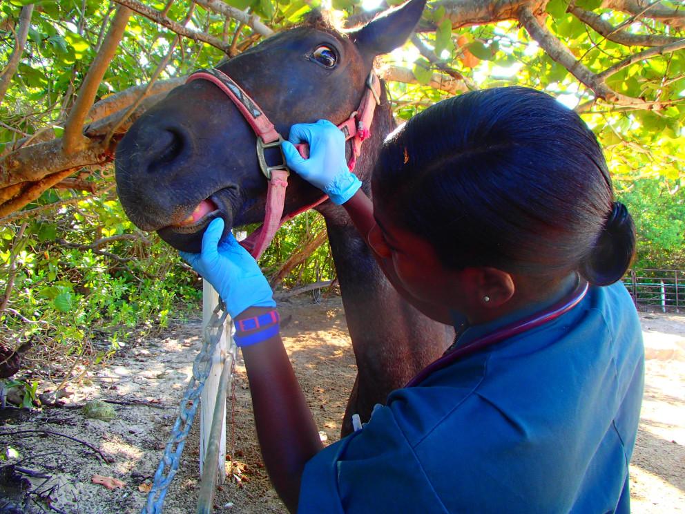 Pferd wird von Tierärztin begutachtet